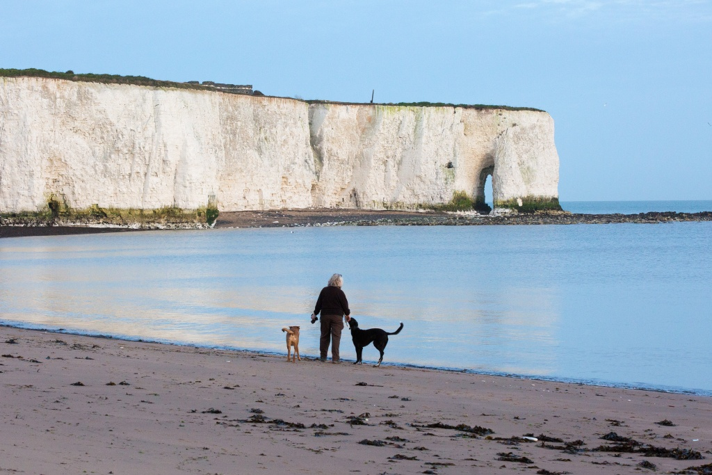 Dog walking at Kingsgate Bay